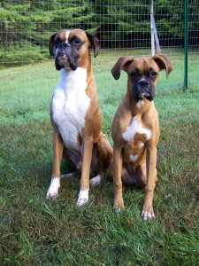 Dash (6yrs) and Delta (6mos). September 2012