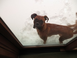 Delta thinks I should let her in.