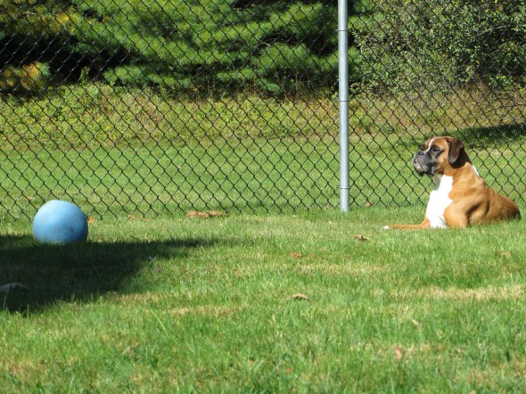 A boy and his ball in his yard. It's a beautiful thing.